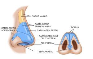 Rinoplastia Anatomia do Nariz Pirâmide Nasal